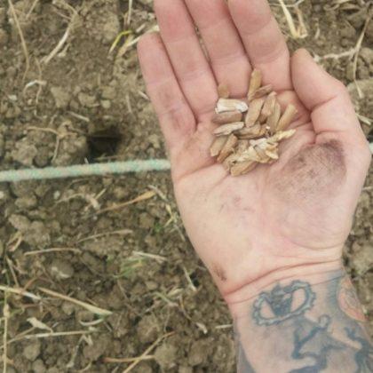 fai da te e coltivazione | DIY and Plantation photo